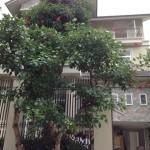 Cho thuê Villa Thảo Điền, Cho thuê biệt thự Quận 2, Biệt thự Thảo Điền cho thuê, Nhà biệt thự Thảo Điền cho thuê, Villa For Rent In Thao Dien, Villa For Rent in Distric 2