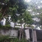 Bán biệt thự APAK khu B hướng Đông Nam